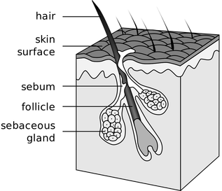 Stop Hair Loss. Cross section of a hair shaft courtesy of https://commons.wikimedia.org/wiki/User:Tsaitgaist